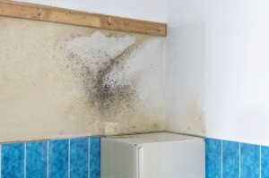 Mold Damage in Bathroom