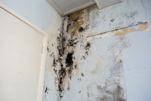 Water damage with mold growth